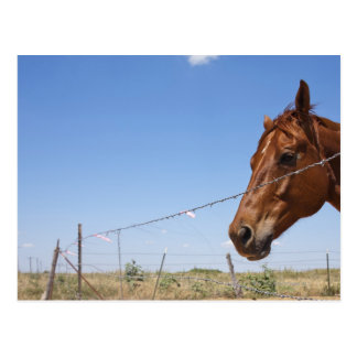USA Texas Chillicothe Horse stands beside Postcards