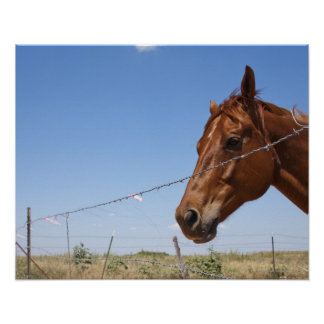 USA, Texas, Chillicothe, Horse stands beside Print