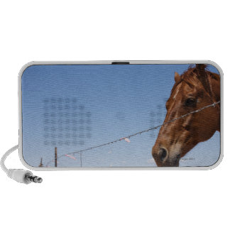 USA, Texas, Chillicothe, Horse stands beside Mp3 Speaker