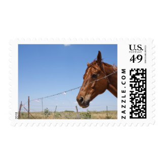 USA, Texas, Chillicothe, Horse stands beside Stamps