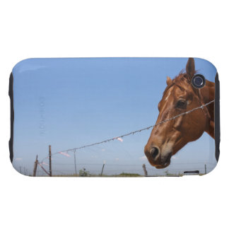 USA, Texas, Chillicothe, Horse stands beside Tough iPhone 3 Cover
