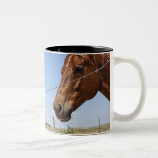 USA, Texas, Chillicothe, Horse stands beside Two-Tone Coffee Mug