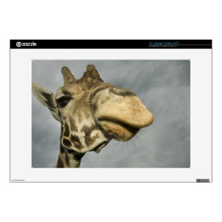 "USA, Texas, Fossil Rim Wildlife Area, giraffe 15"" Laptop Skin"
