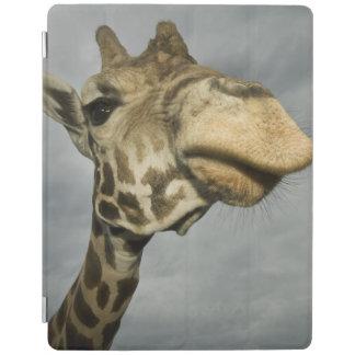 USA, Texas, Fossil Rim Wildlife Area, giraffe iPad Smart Cover