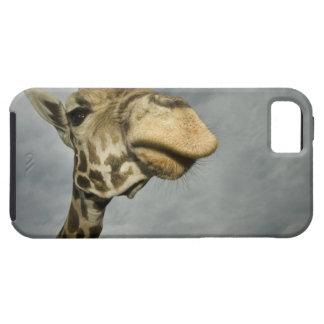USA, Texas, Fossil Rim Wildlife Area, giraffe iPhone SE/5/5s Case