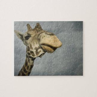 USA, Texas, Fossil Rim Wildlife Area, giraffe Jigsaw Puzzle