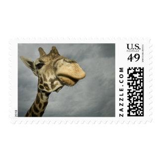 USA, Texas, Fossil Rim Wildlife Area, giraffe Postage