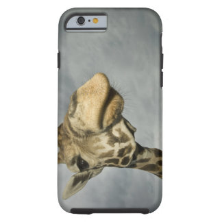 USA, Texas, Fossil Rim Wildlife Area, giraffe Tough iPhone 6 Case