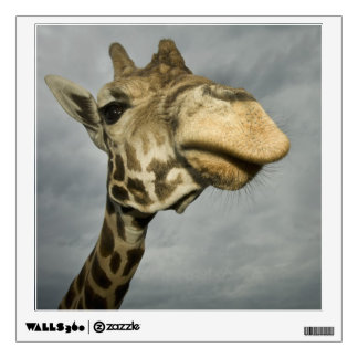 USA, Texas, Fossil Rim Wildlife Area, giraffe Wall Decal
