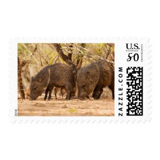 USA, Texas, Hidalgo County 3 Postage