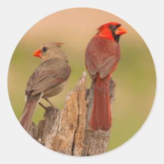 USA, Texas, Hidalgo County. Cardinal Pair Classic Round Sticker