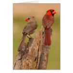 USA, Texas, Hidalgo County. Cardinal Pair Greeting Card