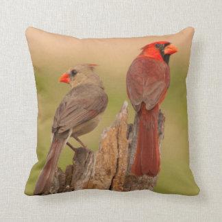 USA, Texas, Hidalgo County. Cardinal Pair Pillow