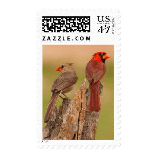 USA, Texas, Hidalgo County. Cardinal Pair Postage Stamp