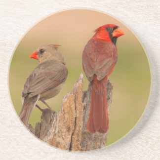 USA, Texas, Hidalgo County. Cardinal Pair Sandstone Coaster