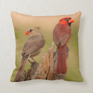 USA, Texas, Hidalgo County. Cardinal Pair Throw Pillow