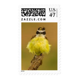 USA, Texas, Hidalgo County Stamp
