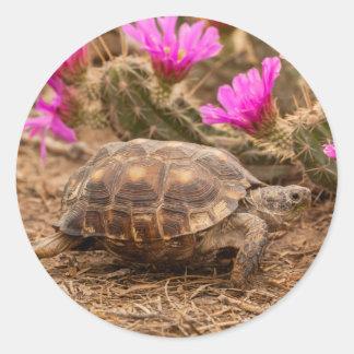 USA, Texas, Hidalgo County. Tortoise Classic Round Sticker