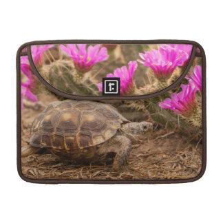 USA, Texas, Hidalgo County. Tortoise MacBook Pro Sleeve
