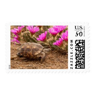 USA, Texas, Hidalgo County. Tortoise Postage