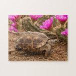 USA, Texas, Hidalgo County. Tortoise Puzzles