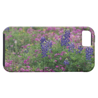 USA, Texas Hill Country. Bluebonnets among phlox iPhone 5 Cover