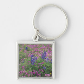 USA, Texas Hill Country. Bluebonnets among phlox Keychain