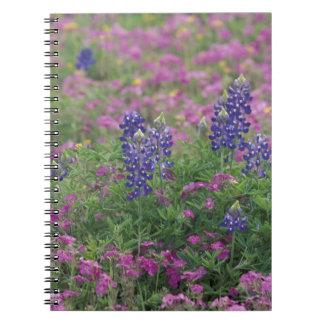 USA, Texas Hill Country. Bluebonnets among phlox Notebook