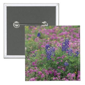 USA, Texas Hill Country. Bluebonnets among phlox Pinback Button