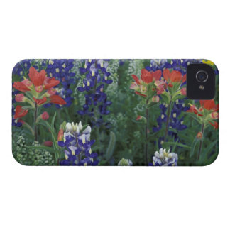 USA, Texas Hill Country. Bluebonnets and Case-Mate iPhone 4 Cases