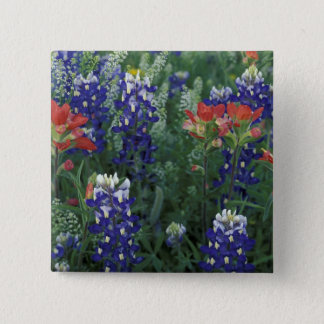 USA, Texas Hill Country. Bluebonnets and Pinback Button