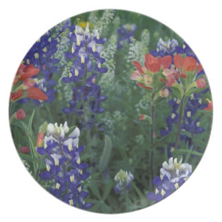 USA, Texas Hill Country. Bluebonnets and Plates