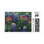USA, Texas Hill Country. Bluebonnets and Postage