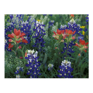 USA Texas Hill Country Bluebonnets and Post Card