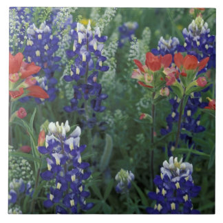 USA Texas Hill Country Bluebonnets and Ceramic Tiles