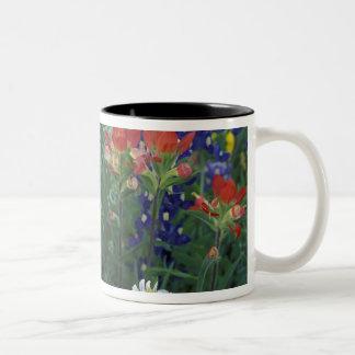 USA, Texas Hill Country. Bluebonnets and Two-Tone Coffee Mug