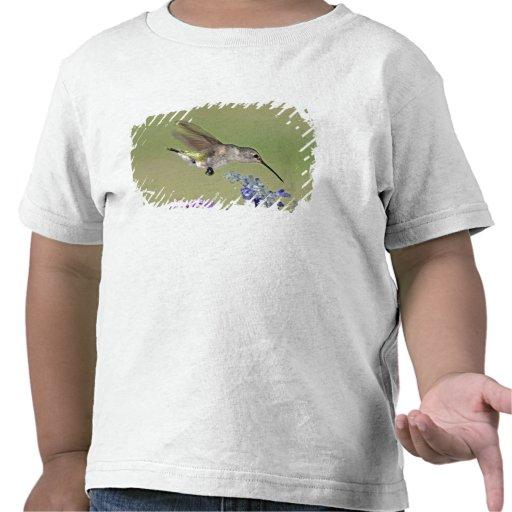 USA, Texas, Hill Country. Female black-chinned Tee Shirt