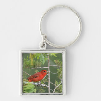 USA, Texas, Hill Country. Male summer tanager Keychain
