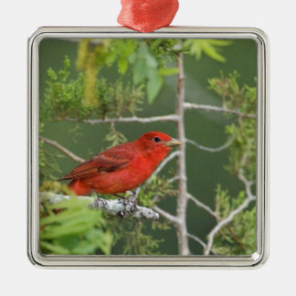 USA, Texas, Hill Country. Male summer tanager Metal Ornament