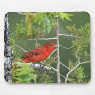 USA, Texas, Hill Country. Male summer tanager Mouse Pad