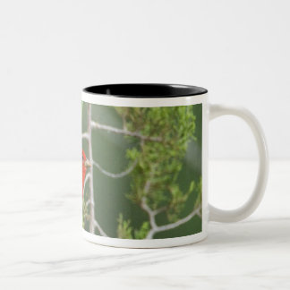 USA, Texas, Hill Country. Male summer tanager Two-Tone Coffee Mug