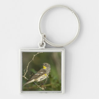USA, Texas, Hill Country. Male yellow-rumped Key Chains