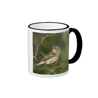 USA, Texas, Hill Country. Male yellow-rumped Coffee Mugs