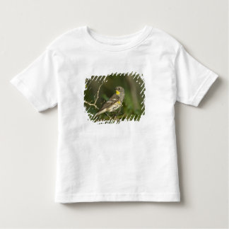 USA, Texas, Hill Country. Male yellow-rumped Toddler T-shirt
