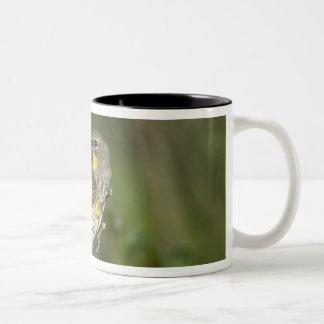 USA, Texas, Hill Country. Male yellow-rumped Two-Tone Coffee Mug