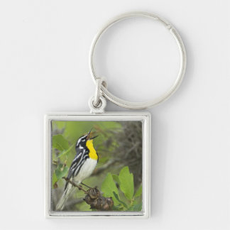 USA, Texas, Hill Country. Male yellow-throated Key Chain
