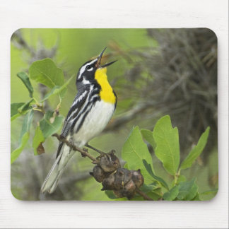 USA Texas Hill Country Male yellow-throated Mousepad