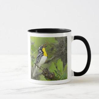 USA, Texas, Hill Country. Male yellow-throated Mug