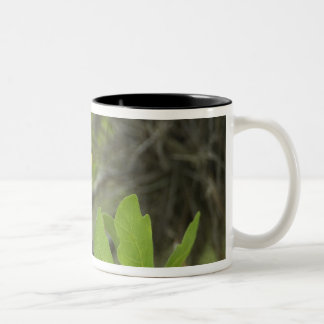 USA, Texas, Hill Country. Male yellow-throated Two-Tone Coffee Mug