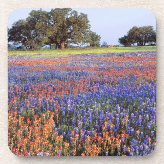 USA, Texas, Llano. Bluebonnets and redbonnets Beverage Coaster